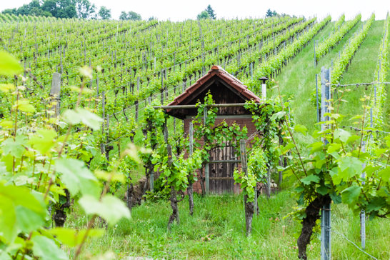 Weingaetner Steuerberatung Weinstadt
